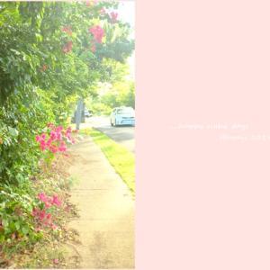 2019年末ハワイ:土曜朝のお散歩