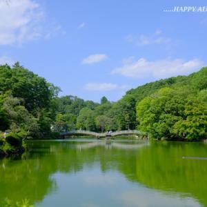 薬師池公園:あじさいの季節
