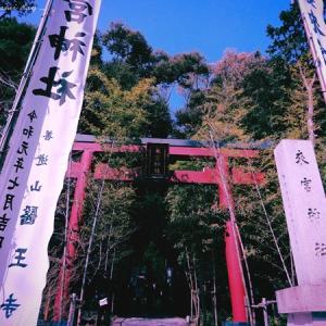 とある3月、熱海 来宮神社で休憩からの伊豆高原