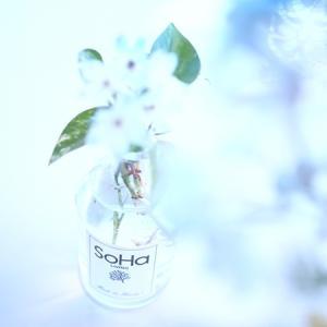 SoHa Livingのディフューザー瓶にお花を活けてみた