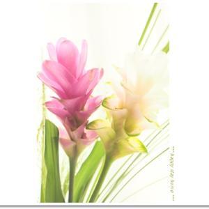 お花の定期便:クルクマ