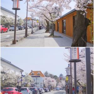 平成最後の鶴ヶ城 満開の桜
