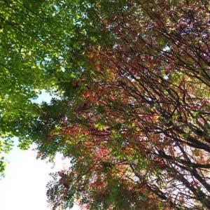 ◆少しずつ紅葉