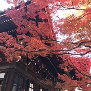 秋の京都満喫(紅葉編)
