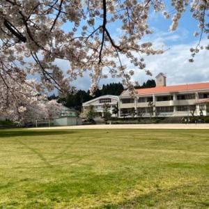桜めぐりキャンプ