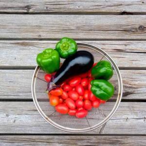 トマトの撤去