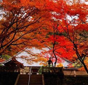 紅葉の旅 国定公園/香嵐渓