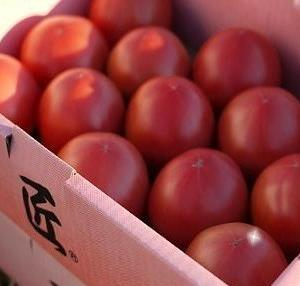 メタボ予防でトマトブーム卸値高騰
