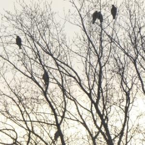 '19仙台MF)今季も公園に鷲の生る木