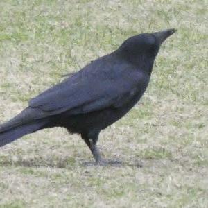 薄暗い朝は野鳥もテンション上がらず?