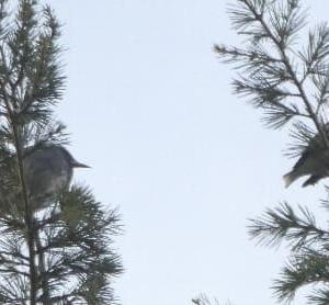 冬小鳥と留小鳥のツーショット