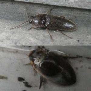 '21仙台)外灯に甲虫の季節解禁