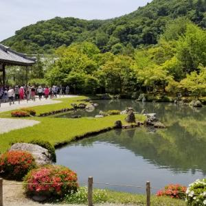 京都*青紅葉を求めて嵐山散策  天龍寺  常寂光寺 * 老松にて初夏の名物をいただく
