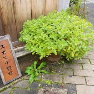 京都*スガマチ食堂  京都で1番好きなお店のご紹介♪