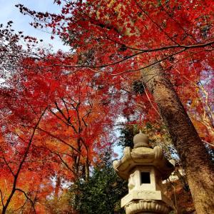 京都*毘沙門堂の紅葉とカフェセルジュのショソンオポム