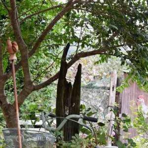 渡り鳥と木犀♪