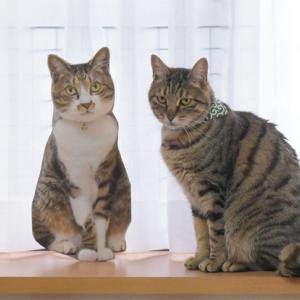 ネコの日のネコ会(1)