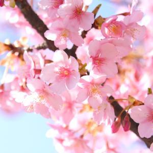 春色のりんごさん