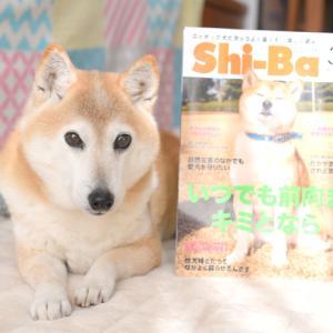 「Shi-Ba」3月号に掲載していただきました