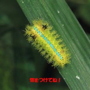■■ 危険な虫にご用心! ■■