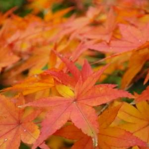 終わる秋と春の準備。