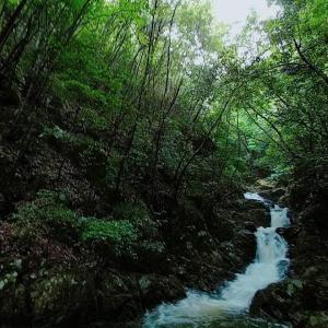 苔むす森。