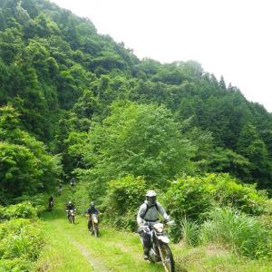 大好きな亀石の林道。