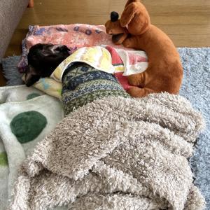ナギヲ、ソファーから床へ
