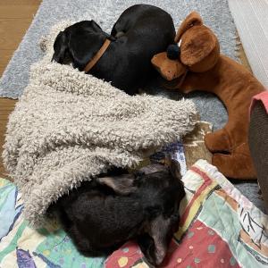 ナギヲに寄り添ってバジルが寝てる