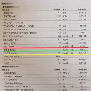 13歳☆春の健康診断*血液検査結果♪