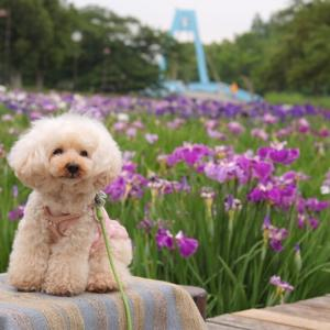 菖蒲咲く公園へ@水元公園♪