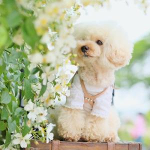 ①満開の白い薔薇と@伊奈バラ園♪