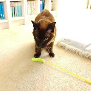 老猫の便秘対策フルコース。現在のまとめ。