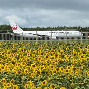 道東弾丸旅行 初日その⑥ ひまわり畑からJALの飛行機をお見送り。