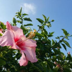 沖縄の過ごしやすいシーズン