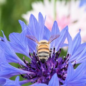 花壇で花粉まみれ