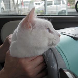 今回は車の中れ待つのれす・・ヽ(^。^)ノ
