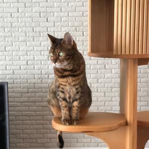 玄人好みの猫の目