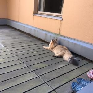 暑くなるらしいけどお外が好き