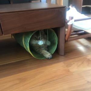 スリコの猫トンネル 地味に人気