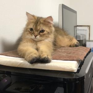 猫飼いあるある 〜パソコン作業をしている時〜