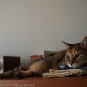 猫のごはん問題
