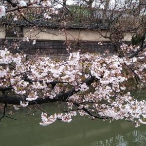 http://azumisoba.blog.fc2.com/blog-entry-420.html