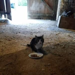 田舎の猫VS都会の猫