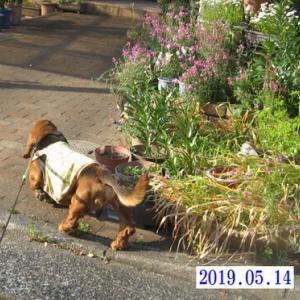 春爛漫のストーカー犬