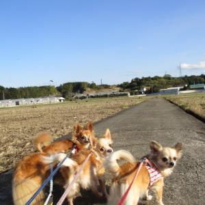お散歩 チャレンジ