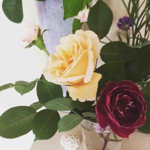 2019;Roses 庭のばら レディヒリンドンとバロン・ジロー・ド・ラン ニュー―ドーン アイスバーグ ティージングジョージア ワイルド・イヴ、ラ・ローズ・ボルドー他