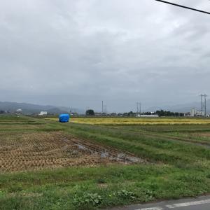 稲刈り22日目 ネテヒカリ