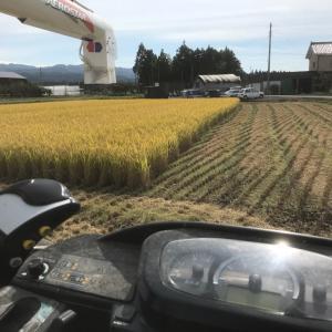 稲刈り26日目  フルアタック失敗