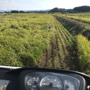 稲刈り1日目 試運転